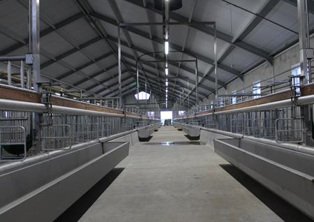 bouw van een kalverenschuur in kamperveen (kampen) door aannemersbedrijf Wielink